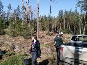 Gimnazistai sodino mišką